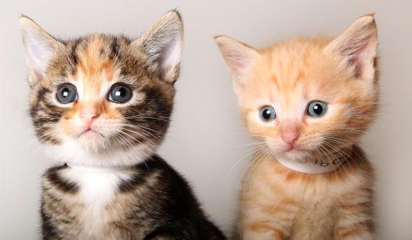 Мы, маленькие шустрики, всегда готовы поиграть с кем-нибудь. Фото: Getty Images