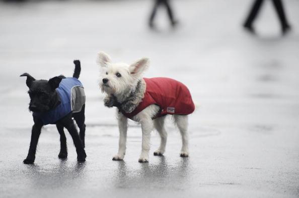 Сейчас уже все в комбинезонах ходят, погода дождливая. Фото: Getty Images