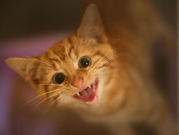 Посмотрите, какие красивые у меня зубки! Фото: Getty Images