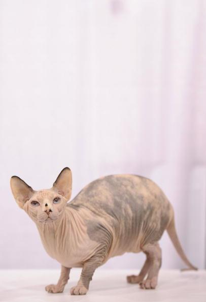 Я – сфинкс. Фото: Getty Images