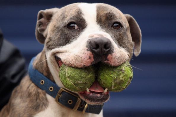 Вот как я умею! Фото: Getty Images