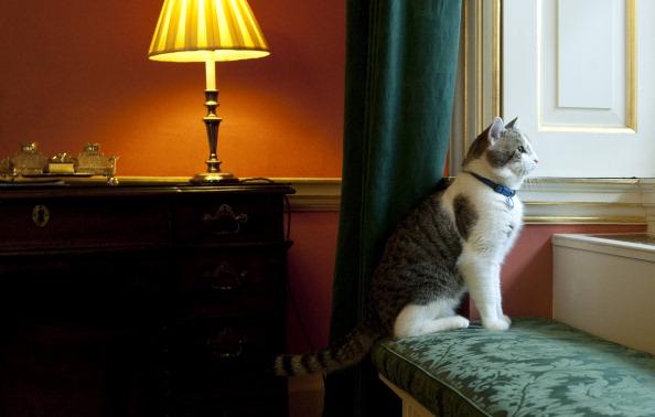 Я не просто кот. Я кот - премьер-министр-ра... Фото: Getty Images