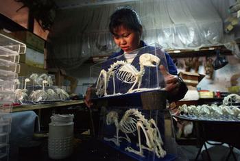 Производство препарированных животных на предприятии в Вэньчжоу. Фото с сайта epochtimes.de