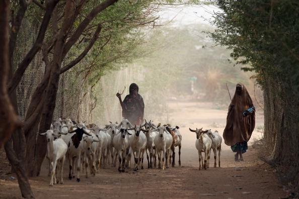 Голод угрожает 320000 детей в Восточной Африке. Фото: Getty Images
