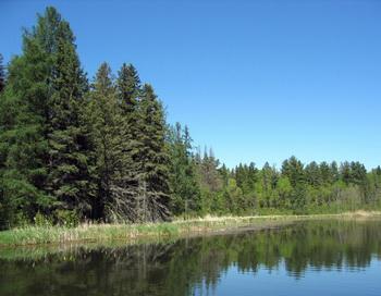 Согласно последним исследованиям, деревья способны переносить ионы во влаге листьев и высвобождать их в атмосферу. Фото: Стефани Лэм/Великая Эпоха (The Epoch Times)