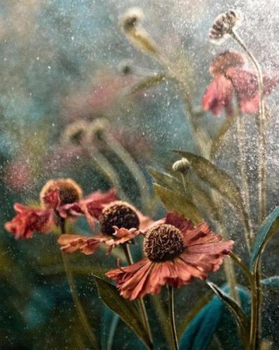 Номинация «Красота растений». Летний дождь (Summer in Rain). Фото:  Magdalena Wasiczek