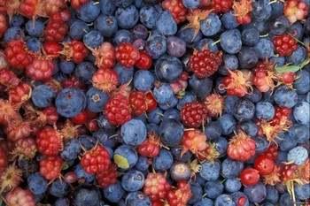 В летнюю жару ягоды отлично насыщают организм влагой и витаминами. Фото: goodfon.ru