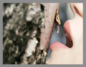 Березовый сок – как сохранить до лета . Фото с hunnyshop.ru