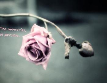 Серая роза – эмблема печали. Фото с сайта wallpapers.99px.ru