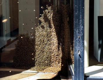 Рой пчёл. Фото: Getty Images