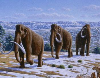 Мамонты были одними из представителей мегафауны, которые вымерли в эпоху плейстоцена. В соответствии с первоначальным исследованием диапазона млекопитающих и их разнообразия в доисторические времена, мамонты не показали каких-либо признаков предрасположенности к вымиранию. Фото: Heinrich Harder