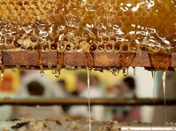 Медовые соты в цеху пасеки Мишмерет. Фото: Хава ТОР/Великая Эпоха (The Epoch Times)