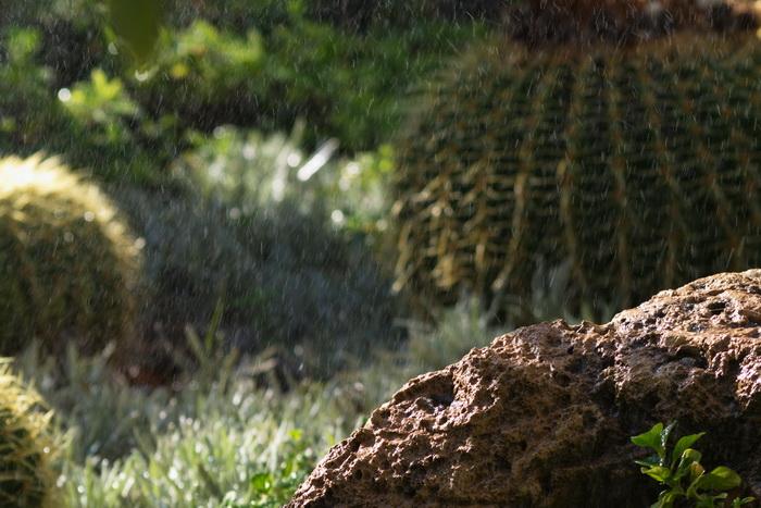 Живая вода — сострадание. Фото: Хава Тор/Великая Эпоха (The Epoch Times)