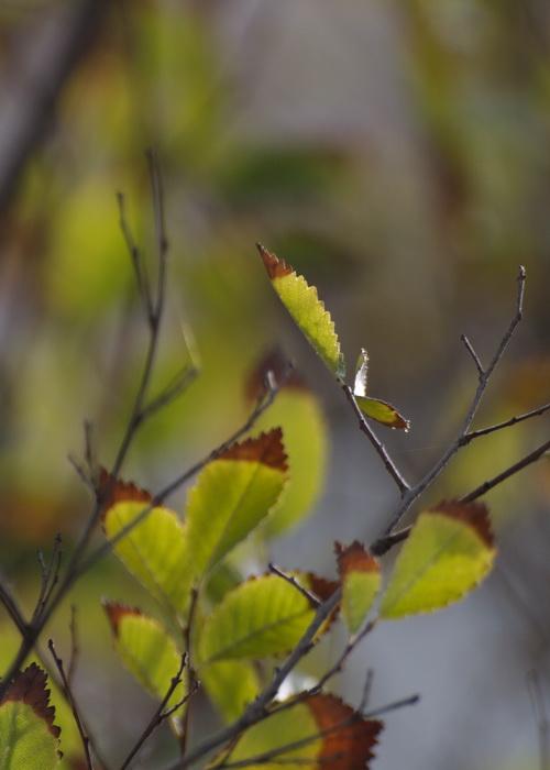 Неожиданный подарок. Фото: Хава Тор/Великая Эпоха (The Epoch Times)