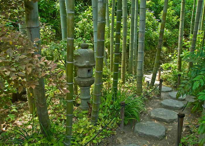 В странах востока давно знают об удивительных свойствах бамбука: в Индии он считается символом дружбы, в Китае — символом долголетия, а Японии верят, что бамбуковые деревья защищают от злых духов, именно поэтому бамбуковые растения окружают многие японские храмы. Фото: Urashimataro/commons.wikimedia.org