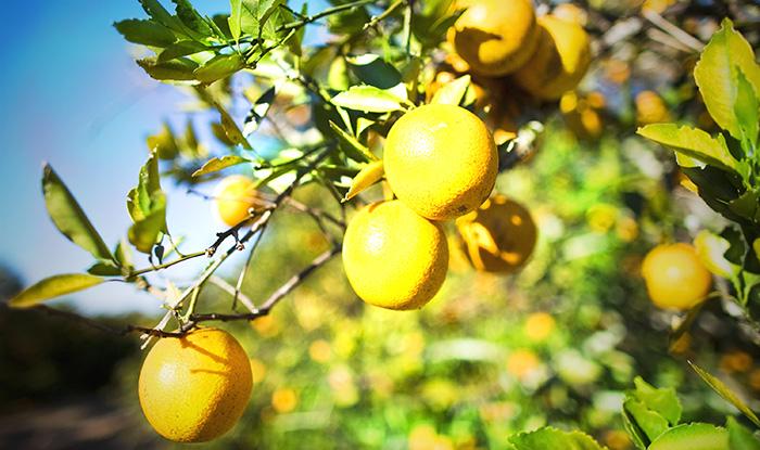 Настоящий витамин С, который содержится во фруктах и овощах отличается от синтезированной аскорбиновой кислоты. Он представляет собой цельный комплекс, в который входит множество компонентов. Фото Matt Stroshane/Getty Images