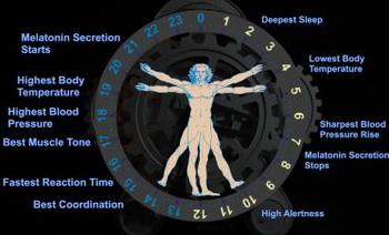Учёные обнаружили, что органы в нашем теле, словно многочисленные независимые существа имеют собственные внутренние часы. Фото: medicalxpress