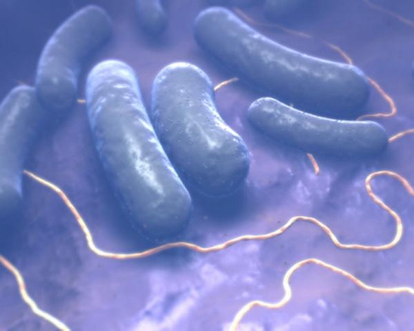 Это бациллы.  Палочковидные бактерии, образующие споры. Бациллы являются возбудителями заболеваний сибирская язва, столбняк и ботулизм.  Бациллы широко распространены в природе: почве, грунтовых водах и иногда в консервах, если их не подвергли тщательной термической обработке. Фото: MedicalRF.com/Getty Images