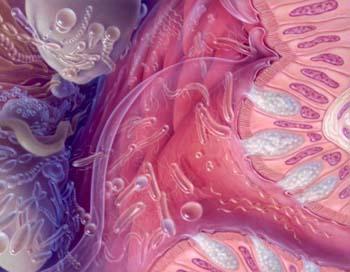 Большую часть микрофлоры толстой кишки составляют бифидобактерии, лактобациллы, эубактерии, клостридии перфрингенс, бактероиды,  кишечные палочки, клебсиеллы и протей. Фото: Jane Hurd/Getty Images
