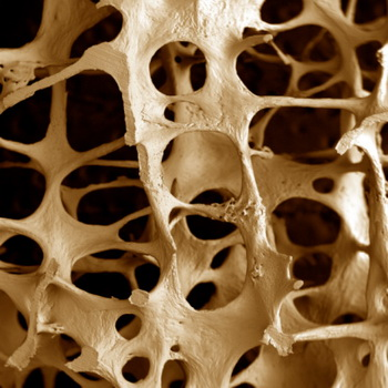 Витамин Е способствует снижению массы костной ткани. Фото: Alan Boyde/Getty Images