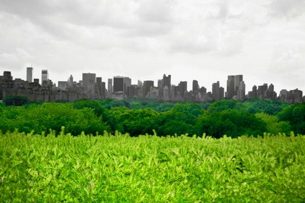 Однако последние полтора столетия мы постепенно утрачиваем связь с природой, становясь жертвами урбанизации. Фото: Glow Images, Inc/Getty Images
