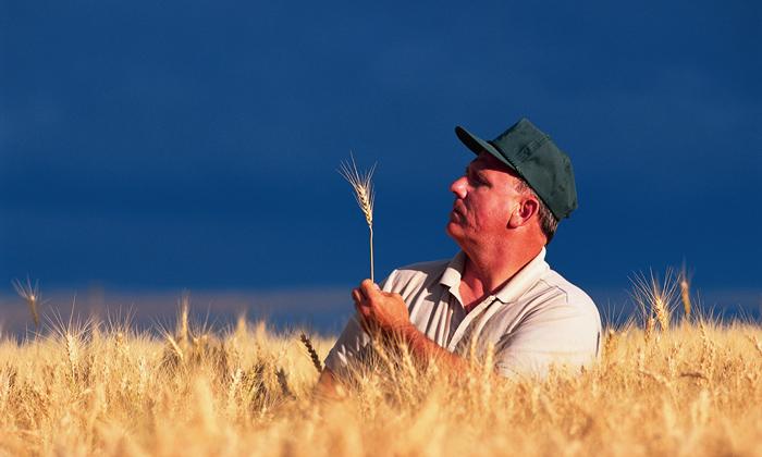 ГМО приводит к вымиранию: лабораторные животные уже в 3-м поколении утрачивают способность к размножению. Фото: shelfreliancesisters.com