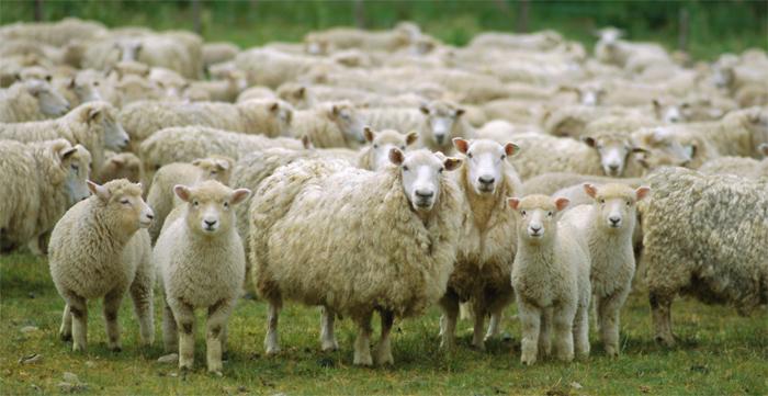 Если вам не помогает подсчёт овец или вы склонны сбиваться, попробуйте другие способы, облегчающие засыпание. Фото: jakeblauvelt.com