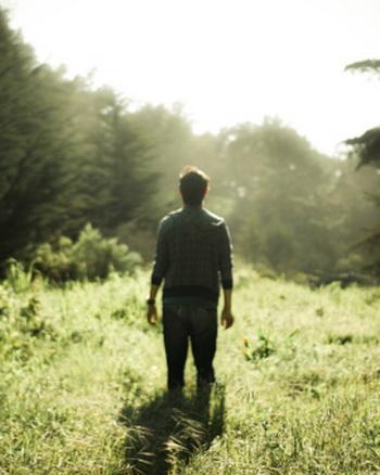 Дикие растения в лесу обладают самой мощной энергетикой. Фото: Jared Giarrusso Photography/Getty Images