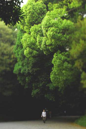 Наши отношения с природой должны строиться на принципах гармонии. Ведь жизнь человека невозможна в отрыве от экосистемы. Фото: Mark Kolbe/Getty Images