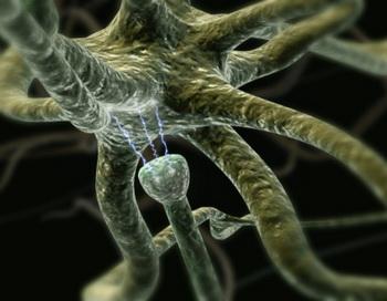 Кстати, интеллектуальные способности человека, по мнению ученых, зависят именно от количества связей между отростками нейронов. Фото: 3D4Medical.com/Getty Images