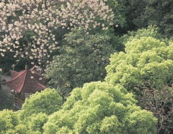 Абрикосовый лес Дунь Феня спас многие жизни. Фото: Comstock Images/Getty Images
