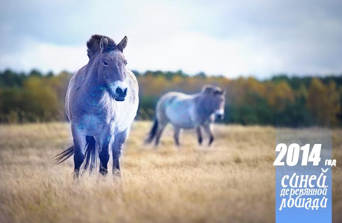 Хотя синяя деревянная лошадь в природе, конечно, не встречается, но с точки зрения китайского календаря тут нет ничего экстраординарного. Фото: PATRICK PLEUL/AFP/Getty Images