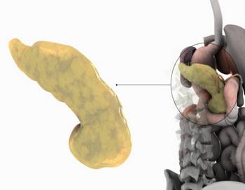 Поджелудочная железа у больных сахарным диабетом 1 типа секретирует инсулин в недостаточном количестве. Фото: 3D4Medical.com/Getty Images