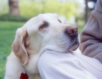 Собаки, обладающие хорошим обонянием, способны диагностировать колоректальный рак с высокой точностью. Фото: Blue Line Pictures /Getty Images