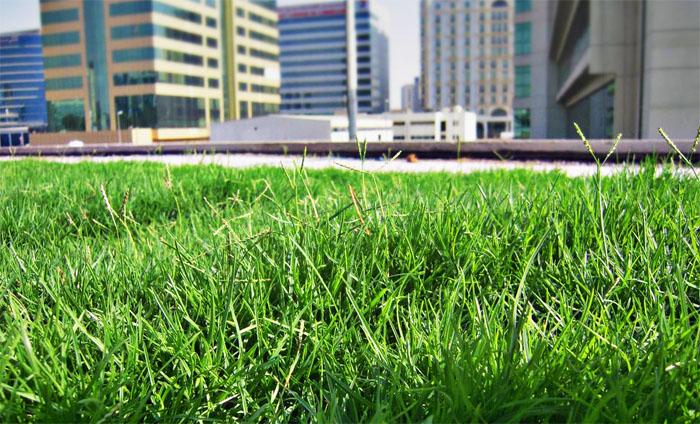 При использовании новых методов озеленения концентрации некоторых поллютантов в городском воздухе снизилась более чем в восемь раз. Фото: greenmat.ae