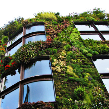 Так называемая «вертикальная зелень» становится все более привлекательным вариантом в проектировании современных зданий. Фото: gaptrailsbn.wordpress.com