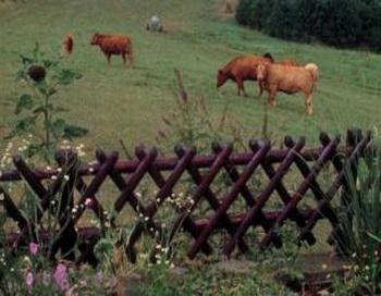 Прежде чем прыгать через забор к коровам, подумайте, насколько это  безопасно. Фото: Photos.com