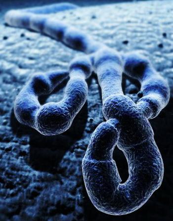 Вирус Эбола принадлежит к семейству Filoviridae (филовирусов) и имеет пять различных видов: Заир, Судан, Кот-дИвуар, Бундибуджио и Рестон. Фото: 3D4Medical.com/Getty Images