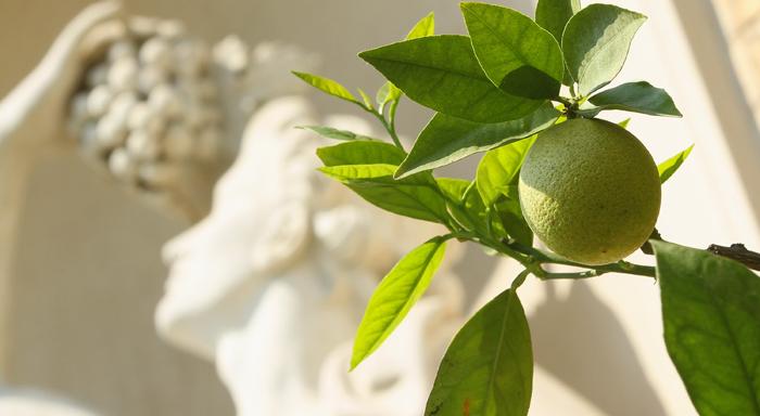 Излишне говорить о том, что фрукты и овощи обладают всем необходимым, чтобы защитить нас от рака. Фото: Sean Gallup/Getty Images