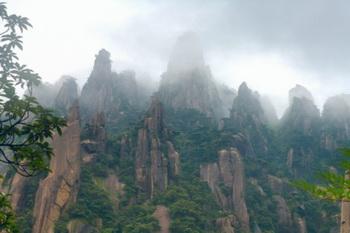 Есть много разновидностей Золотых Нитей, которые главным образом растут в провинциях Сычуань, Шаньси, Юньнань и Гуйчжоу. Фото: John Wang /Getty Images