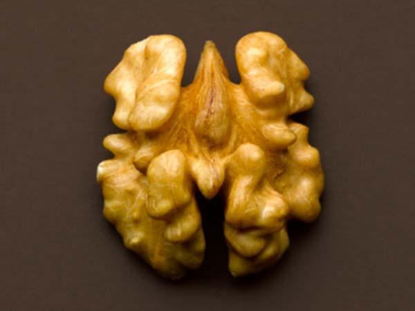 Грецкие орехи традиционно рассматриваются как пища для мозга, на что намекает их забавная форма. Фото: Still Images /Getty Images