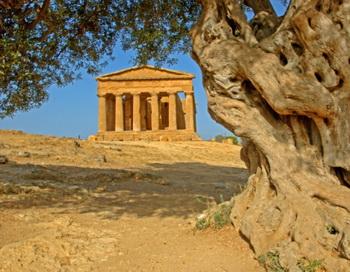 Оливковое масло является основным компонентом средиземноморской диеты. Фото: Sylvester Adams/Getty Images