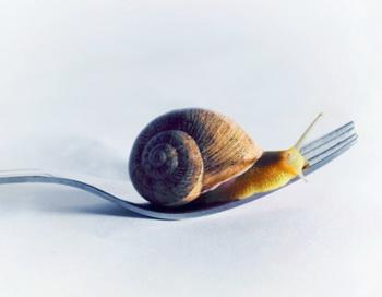 Символом движения Slow food стала улитка. Фото: www.victorianoizquierdo.com/Getty Images