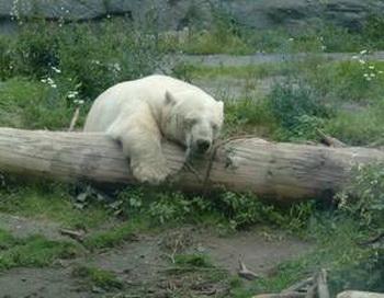 Если вы устали, как медведь на охоте, и способны лишь зевать, подобно гиппопотаму, в таком случае для здоровья лучше немного вздремнуть, но не принимать сомнительные химические препараты. Фото: biertrinker22/Pixelio