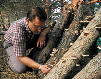 Шиитаке, вероятно, является наиболее известным грибом, обладающим лечебными и питательными свойствами. Фото: David Q. Cavagnaro /Getty Images