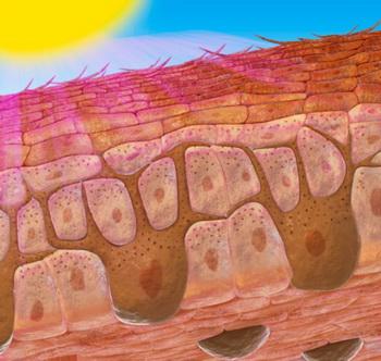 Меланин накапливается в меланосомах, и по мере заполнения гранулами меланина они мигрируют к кератиноцитам по специальным отросткам. Фото: Dorling Kindersley/Getty Images