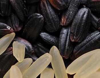 Черный рис  американские ученые назвали лекарством от старости. Фото сайта vesti.kz
