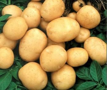 Картофель понижает кровяное давление. Фото с pristavki.org