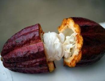 Антиоксиданты и флавоноиды - естественные пигменты в бобах какао, которые защищают организм от окислителей. Фото: Yuri Cortez/AFP/Getty Images