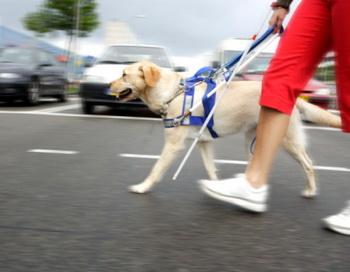 Тем, кто освоит навыки эхолокации, не потребуются услуги собак-повыдырей. Фото: altrendo images/Getty Images